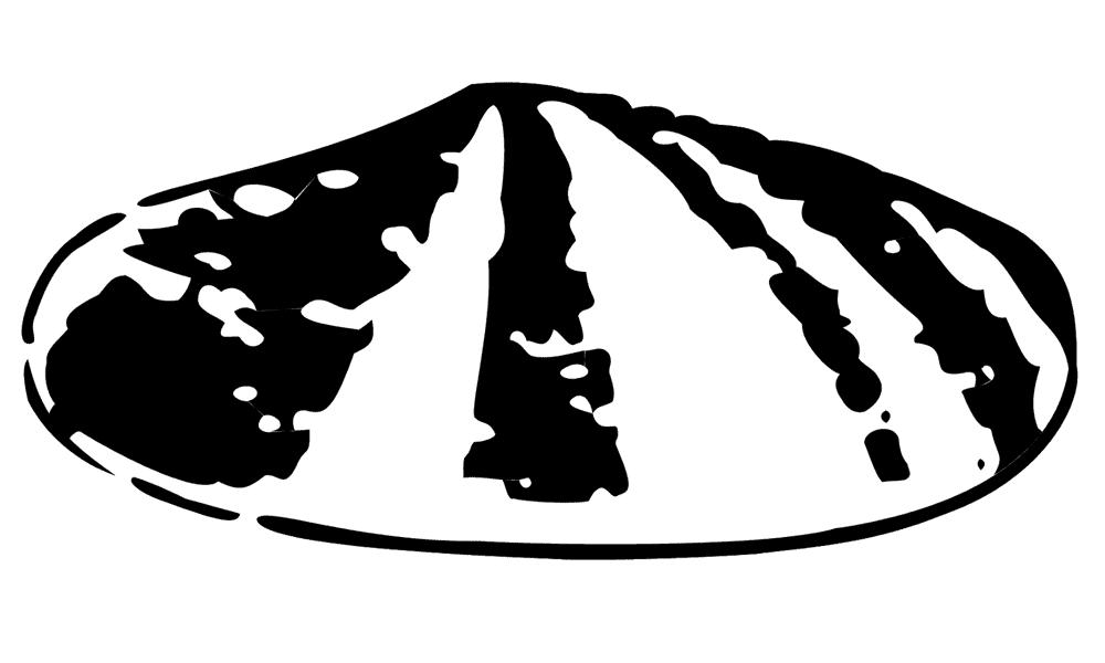 Original Shell Logo Design