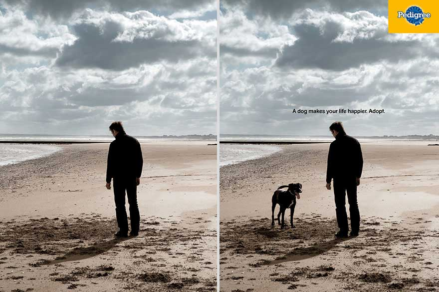 Clever Dog Adverts