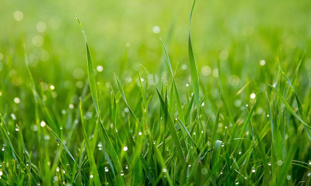 Lower Detail Grass